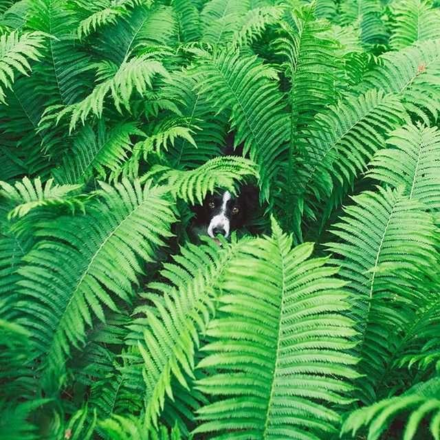 Найди Момо