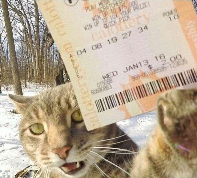 Этот кот делает селфи лучше вас