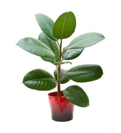 10 найкорисніших рослин для дому